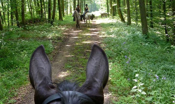 Lux Pferd