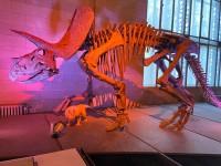 Bxl-Musée7.jpg.jpg
